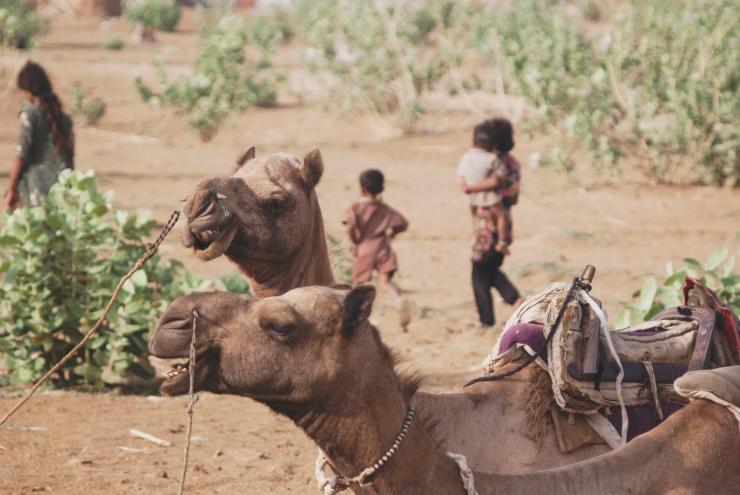 desierto2 camellos niños