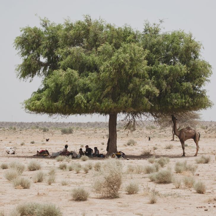desierto5arbol