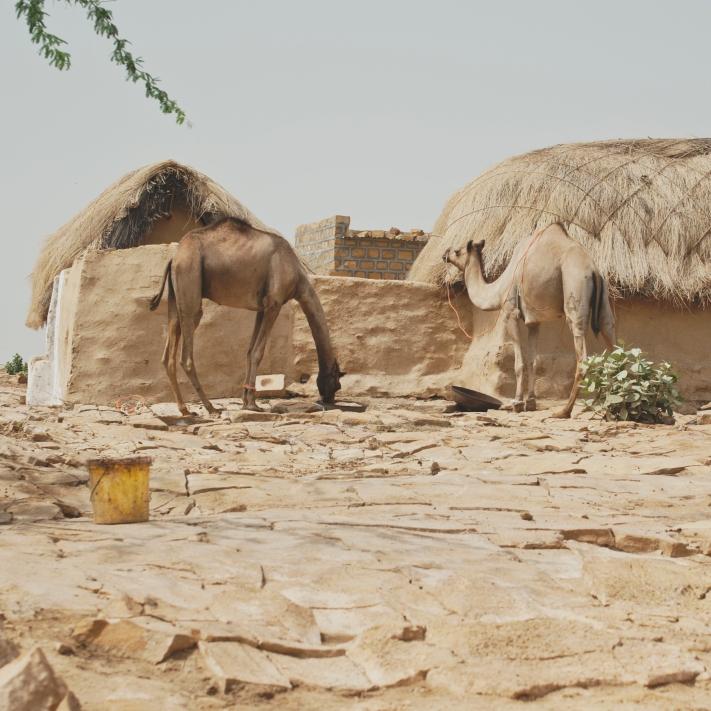desierto8 camellos y casas